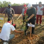 Bupati Dan Danlanal Palembang Tanam Mangrove Di Kawasan Pelabuhan Roro